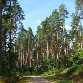 Luoghi del Ticino da non perdere: la Riserva forestale della Forcaridra