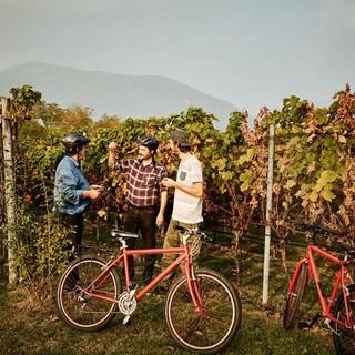 Bike'n'Wine, pedalando nel Mendrisiotto alla scoperta del vino