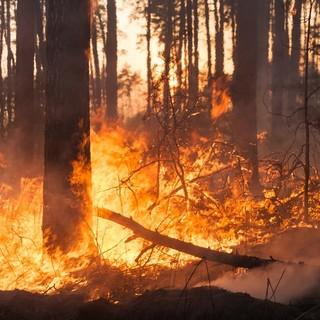 Incendio boschivo sotto la zona Prato Grande, nel Luganese