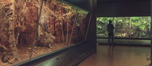 Carrellata sui musei di Lugano: parliamo del Museo cantonale di storia naturale