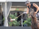 Il torneo del Polo Club di Ascona spegne dieci candeline